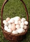 huevos-en-una-cesta