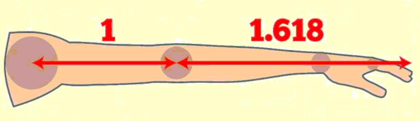 relacion-brazo-aureo